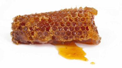 Bild von So gesund und wichtig ist Honig für unsere Gesundheit