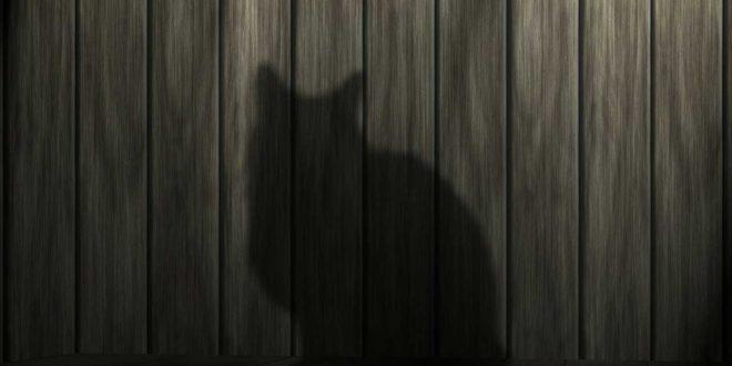 katzenberger di t plan und rezepte f r schnelles. Black Bedroom Furniture Sets. Home Design Ideas