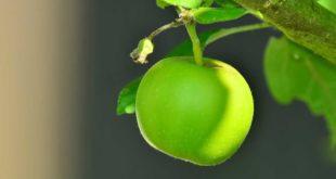 Wie viel Kalorien hat ein Apfel?