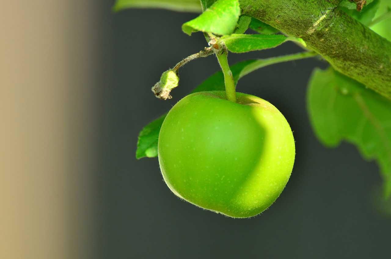 Wie hoch sind eigentlich die Apfel Kalorien?