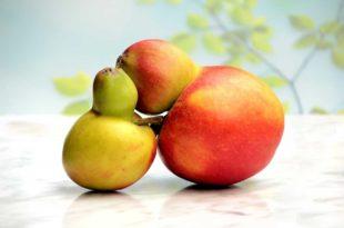 Mit der Bruker-Diät pflanzlich und naturbelassen abnehmen