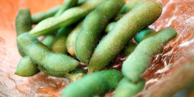 Soja-Superfood Edamame: Das Power-Protein in der haarigen Hülle