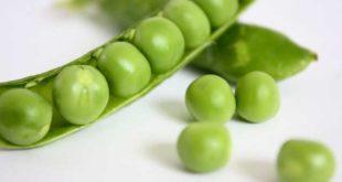 Erbsenprotein: veganes Proteinpulver als Alternative