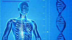 Definition Kataboler Stoffwechsel - Einfach erklärt