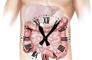 Hat Magenknurren etwas mit der Fettverbrennung zu tun?